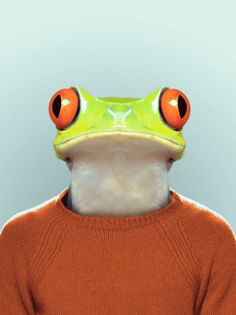 Frog wearing a jumper. (Photo by Yago Partal/Barcroft Media)