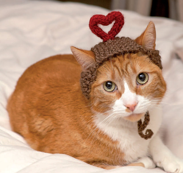 "This photo provided by Running Press and Quarto, Inc. shows I Heart You from the book, ""Cats in Hats"", published by Running Press. (Photo by Liz Coleman/Running Press/Quarto, Inc. via AP Photo)"