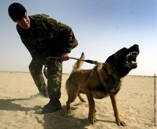 Attack Dog Training