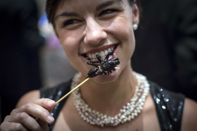 Daniela Kittinger chews a cooked tarantula at the 110th Explorers Club Annual Dinner at the Waldorf Astoria in New York March 15, 2014. (Photo by Andrew Kelly/Reuters)