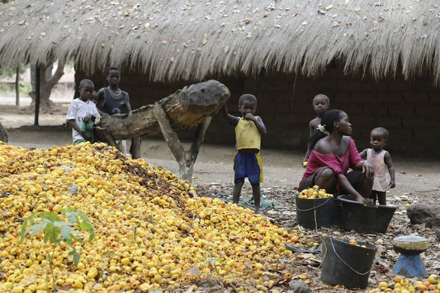 A woman sorts through a pile of cashew nuts as children look on next to a farm owned by former Guinea Bissau army chief General Antonio Indjai outside Mansoa, Guinea-Bissau, May 8, 2015.  Relaxing in flip-flops in a shady corner of his farm near a pile of freshly-raked cashew nuts, the former head of Guinea Bissau's army General Antonio Indjai says he has turned in his weapons and his days as a coup leader are over. (Photo by Emma Farge/Reuters)