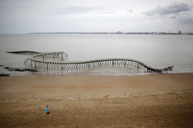 "A boy runs in front of the ""Serpent d'ocean"" (Ocean snake) in Saint-Brevin-les-Pins, western France, April 24, 2014. Ocean Serpent is a  giant aluminium sea serpent skeleton by the Chinese artist Huang Yong Ping. (Photo by Stephane Mahe/Reuters)"