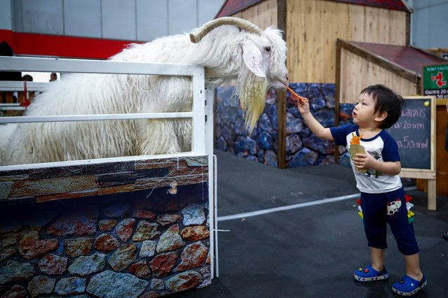 A young boy feeds carrots to a goat at the Thailand Pet Expo 2019 in Bangkok, Thailand, 30 May 2019. The four-day expo caters to pet owners' needs and gathers a variety of vendors offering pet products ranging from food and medicines, to grooming equipment, toys, or carriages. The Thailand Pet Expo 2019 runs from 30 May to 02 June. (Photo by Diego Azubel/EPA/EFE)