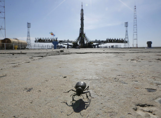 A beetle crosses the the launch pad as a Russian Soyuz-FG booster rocket with the space capsule Soyuz TMA-13M, that will carry new crew to the International Space Station (ISS), is being fixed after it was pulled from a hangar at the Baikonur Cosmodrome in Kazakhstan, on May 26, 2014. (AP Photo/Dmitry Lovetsky)