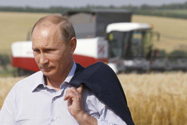 "Russia's President Vladimir Putin visits a barley field of the ""Russia"" collective farm located near the settlement of Grigoropolisskaya, June 18, 2014. (Photo by Eduard Korniyenko/Reuters)"