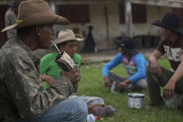 """In this May 16, 2017 photo, cowboys drink """"Terere"""", an herbal """"mate"""" beverage served ice-cold in a glass made out of an ox horn in Corumba, in the Pantanal wetlands of Mato Grosso do Sul state, Brazil. On thier feet hours before sunrise, the cowboys get ready to wake up the herd of oxen for a new day in the three-week pilgrimage in search of grass to graze. (Photo by Eraldo Peres/AP Photo)"""