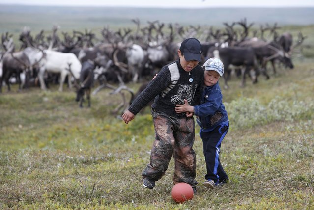 Sons of local herders play with a ball near reindeer at a camping ground, some 200 km (124 miles) northeast of Naryan-Mar, the administrative centre of Nenets Autonomous Area, far northern Russia, August 2, 2015. (Photo by Sergei Karpukhin/Reuters)