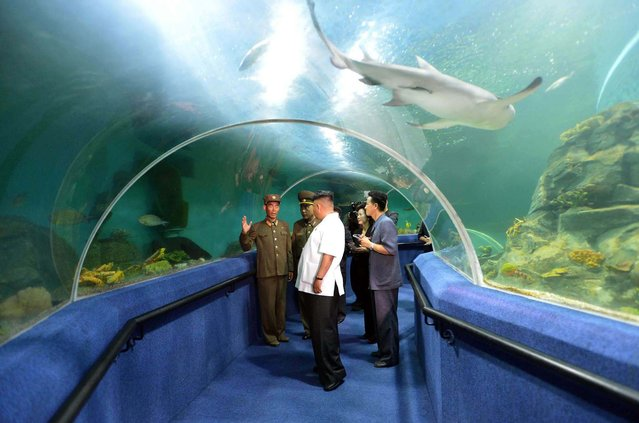This undated picture released from North Korea's official Korean Central News Agency (KCNA) on July 6, 2014 shows North Korean leader Kim Jong-Un (C) visiting an aquarium at the Songdowon International Children's Camp in Wonsan, Kangwon province. (Photo by AFP Photo/KCNA via KNS)