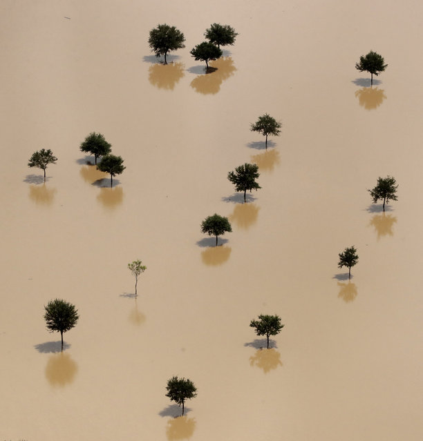 Trees rise from a field submerged by water from the flooded Brazos River in the aftermath of Hurricane Harvey Friday, September 1, 2017, near Freeport, Tex. (Photo by Charlie Riedel/AP Photo)