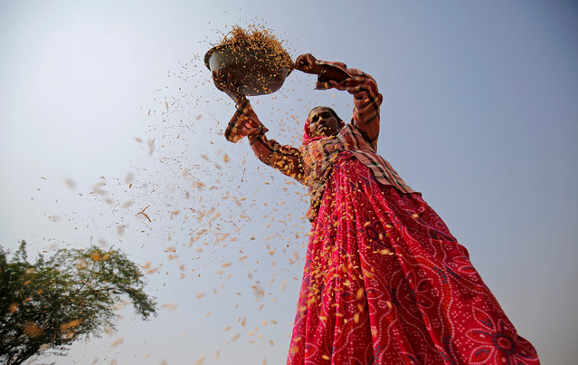 A woman winnows rice in a field on the outskirts of Ahmedabad, India on November 10, 2017. (Photo by Amit Dave/Reuters)