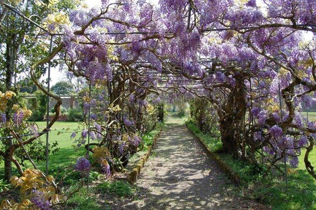 Kawachi Fuji Garden In Japan