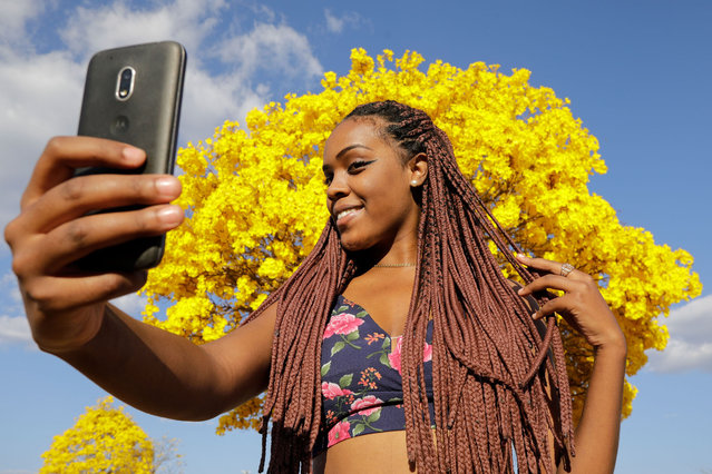 A woman poses for a selfie in front of a yellow ipe or lapacho (Handroanthus serratifolius) in the central region of Brasilia on September 1, 2020. (Photo by Sergio Lima/AFP Photo)