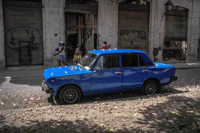 "A Soviet-era Lada car is sprinkled in flowers after it parked under a tree on a street in Havana, Cuba, Friday, March 19, 2021. Maintenance of Lada cars is a trial. Owners manage to get some spare parts through ""mules,"" people who hand-carry goods into the island, but sometimes they must have parts made by hand. (Photo by Ramon Espinosa/AP Photo)"