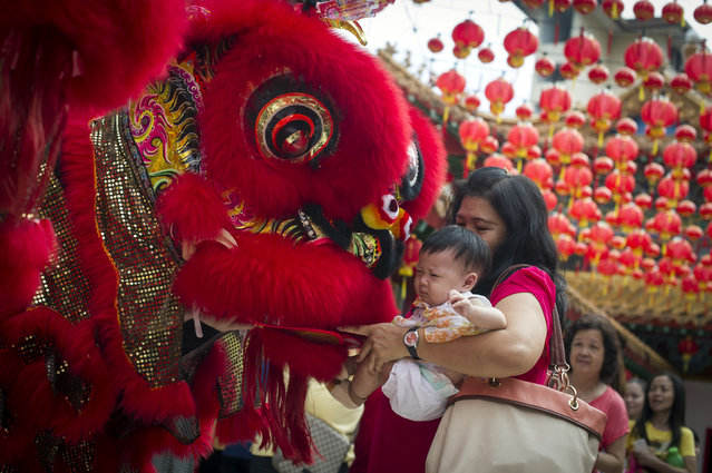 A Malaysian woman and her child give red packet to the lion dance troupe during the lion dance performance on the first day of Chinese Lunar New Year at a temple in Kuala Lumpur, Malaysia on Thursday, February 19, 2015. (Photo by Joshua Paul/AP Photo)
