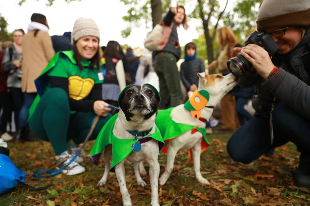 A dog in costume poses for photos during the 28th Annual Tompkins Square Halloween Dog Parade at East River Park Amphitheater in New York on October 28, 2018. (Photo by Gordon Donovan/Yahoo News)