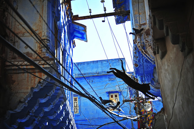 """""""The Blue City"""". Known as the """"Blue City"""", Jodhpur in India is fulled of painted blue houses. There are small alleys between houses. If you looked upward, those blue houses and the sky are contrast finely with each other. Photo location: Jodhpur, India. (Photo and caption by Fei Yan/National Geographic Photo Contest)"""