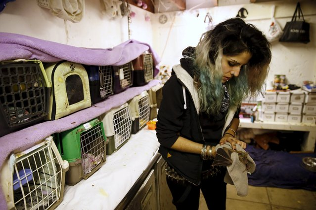 Israeli woman, Nora Lifschitz, 28, treats an Egyptian fruit bat at her home in Tel Aviv February 22, 2016. (Photo by Baz Ratner/Reuters)