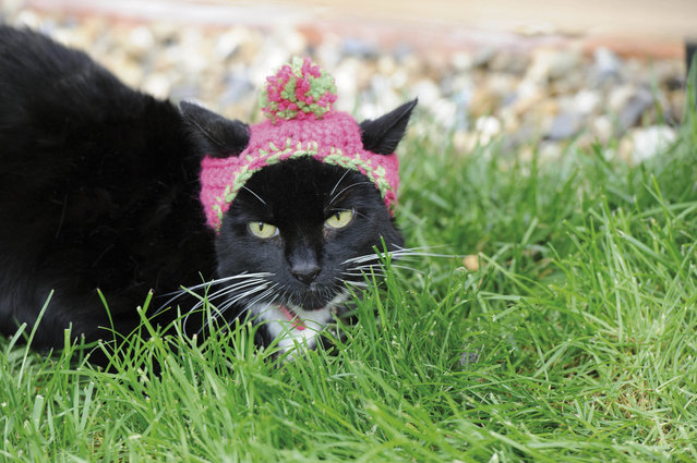 "This photo provided by Running Press and Quarto, Inc. shows Pom Pom Hat from the book, ""Cats in Hats"", published by Running Press. (Photo by Liz Coleman/Running Press/Quarto, Inc. via AP Photo)"