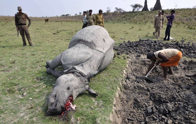 Indian forest officials and security personnel inspect the body of a one-horned rhinoceros which was killed and dehorned by poachers at the Pobitora Wildlife Sanctuary some 45kms from Guwahati in the northeastern state of Assam on March 26, 2014. Forest officials shot two poachers to death inside the sanctuary after they had killed the rhino. A third suspected poacher escaped with the animal's horn. (Photo by Biju Boro/AFP Photo)