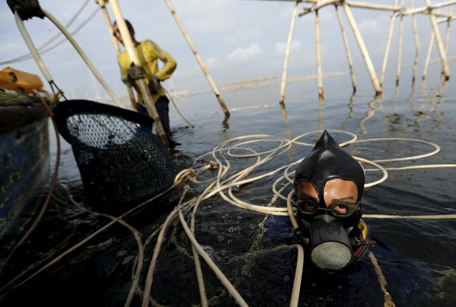 Eghy (L) uses his makeshift snorkel as his colleague lifts up green mussels to their boat in Jakarta Bay, Indonesia, April 20, 2016. (Photo by Reuters/Beawiharta)
