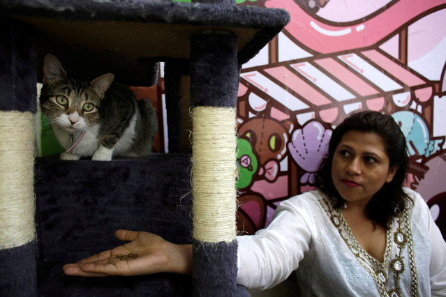"""A customer gives food to a cat inside """"Meow"""" cafe, where diners can play, interact or adopt cats given away by their former owners or rescued from the streets, in Monterrey, Mexico, May 13, 2016. (Photo by Daniel Becerril/Reuters)"""