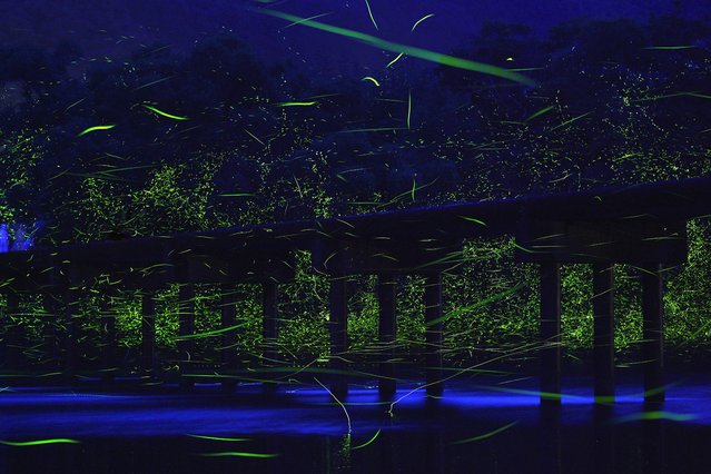 """""""A small, low bridge over the Shimanto River, known as the last crystal clear river in Japan. In the early summer twilight, genji botaru fireflies fly exuberantly over the river surface. With paddy fields along the river, the sight represents an image of a countryside where people and nature coexist"""". – Takehito Miyatake. (Photo by Takehito Miyatake/Steven Kasher Gallery)"""