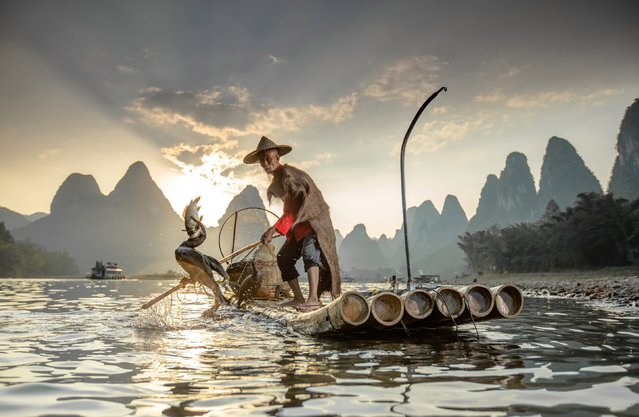 A fisherman with a close bond to cormorants uses the flock of birds to catch big fish in Li river in Guilin, China. The aquatic birds can be seen perching on a bamboo raft before swooping into the calm water to grasp hold of prey. (Photo by Julia Wimmerlin/Solnet News & Photo Agency)