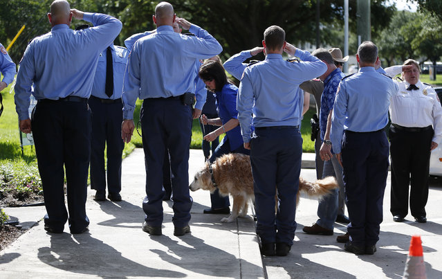 Bretagne the last surviving search and rescue dog from 9/11 is walked by her handler Denise Corliss past a flank of members of the Cy-Fair Volunteer Fire Department, as she was brought into the Fairfield Animal Hospital, Monday, June 6, 2016, in Cypress, Texas to be euthanized. (Photo by Karen Warren/Houston Chronicle via AP Photo)