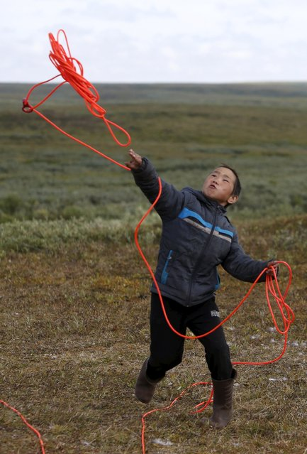 A boy, one of the children of local herders, throws lasso at a reindeer camping ground, some 200 km (124 miles) northeast of Naryan-Mar, the administrative centre of Nenets Autonomous Area, far northern Russia, August 2, 2015. (Photo by Sergei Karpukhin/Reuters)