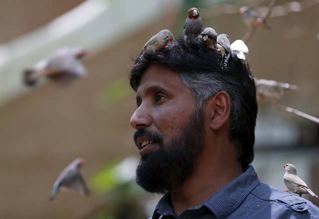 Birds perch on the head of Abdulrahman al-Sebai, who keeps more than 500 birds as a hobby, at his farm in the central Saudi province of Qassim September 2, 2015. (Photo by Faisal Al Nasser/Reuters)
