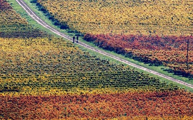 Autumn colored vineyards around the castle of Hambach in Hambach near Neustadt an der Weinstrasse, Germany, 17 October 2017. (Photo by Ronald Wittek/EPA/EFE)