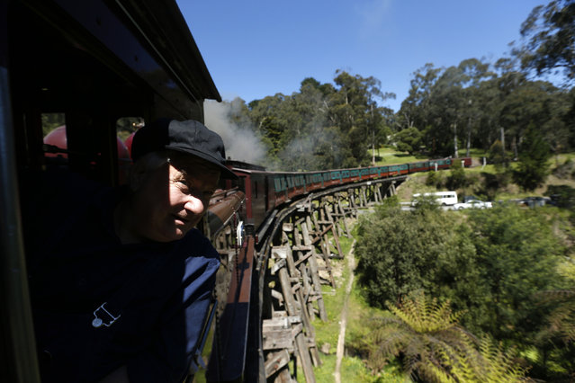 Puffing Billy steam engine driver Steve Holmes, 61, drives locomotive 12A across the Monbulk Creek trestle from Lakeside to Belgrave station near Melbourne, October 20, 2014. (Photo by Jason Reed/Reuters)