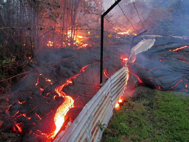 This photo taken on October 31, 2014, and released by the U.S. Geological Survey, shows lava from an upstream lobe, that was active in the forest below the Pahoa cemetery, overcoming a fence marking a private property line near the town of Pahoa, Hawaii. (Photo by AP Photo/U.S. Geological Survey)