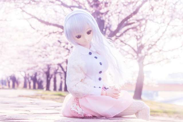 """Sunny spring"". Location:Arakawa riverside at morning. (AZURE)"
