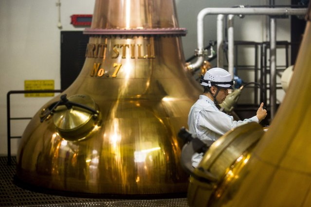 A worker takes a sample from a spirit still at Suntory Holdings' Yamazaki Distillery in Shimamoto town, Osaka prefecture, near Kyoto, December 1, 2014. (Photo by Thomas Peter/Reuters)