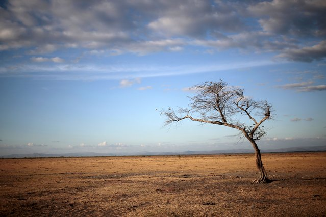 A tree stands at Tisma lagoon, Nicaragua February 29, 2016. (Photo by Oswaldo Rivas/Reuters)