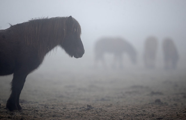 An Icelandic horse stands in a paddock of a stud farm in Wehrheim near Frankfurt, Germany, while others graze in the background on a foggy Saturday, November 28, 2020. (Photo by Michael Probst/AP Photo)