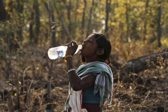 In this Saturday, February 21, 2015 photo, a member of India's Dongria tribe drinks water from a plastic bottle during the two-day long Niyamraja Festival atop the Niyamgiri hills near Lanjigarh in Kalahandi district, Orissa state, India. (Photo by Biswaranjan Rout/AP Photo)