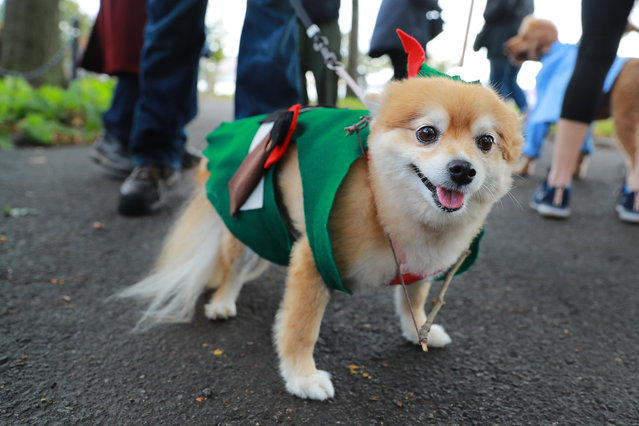 A dog dressed as Robin Hood attends the 28th Annual Tompkins Square Halloween Dog Parade at East River Park Amphitheater in New York on October 28, 2018. (Photo by Gordon Donovan/Yahoo News)
