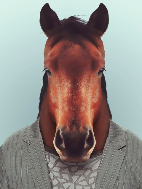 Horse wearing a suit. (Photo by Yago Partal/Barcroft Media)