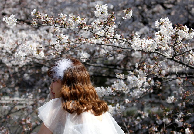 A woman poses for a photograph in front of cherry blossoms in almost full bloom in Tokyo, Japan, March 27, 2019. (Photo by Issei Kato/Reuters)