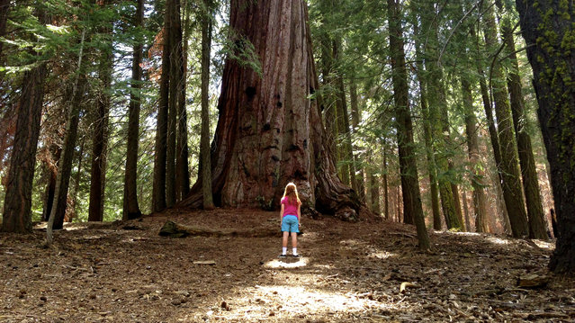 """Among the Giant"". Capturing a brief moment of wonder and awe during a trip to Sequoia National Forest and the Trail of 100 Giants. Photo location: Sequoia National Forest, CA. (Photo and caption by James Eimmerman/National Geographic Photo Contest)"