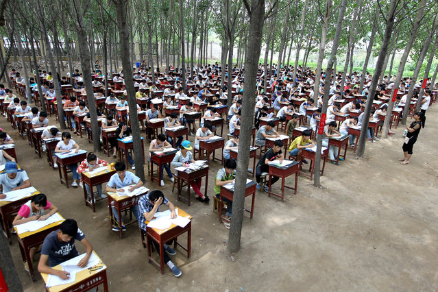 More than 800 students of grade two take part in the end-of-term exam in poplar woods at Fengqiu No.1 High School on July 3, 2015 in Fengqiu County, China. The schoolmaster said that most students often read books in the woods, it's a relaxing place and can relieve students' strain. (Photo by ChinaFotoPress/ChinaFotoPress via Getty Images)