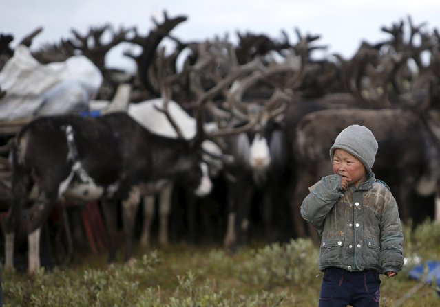 A boy, one of the children of local herders, stands near a herd of reindeer at a camping ground, some 200 km (124 miles) northeast of Naryan-Mar, the administrative centre of Nenets Autonomous Area, far northern Russia, August 2, 2015. (Photo by Sergei Karpukhin/Reuters)
