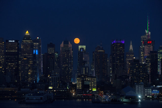 The full moon rises above the skyscrapers in Manhattan, New York on June 20, 2016. For the first time since the Summer of Love in 1967, June's full moon, also known as the Strawberry Moon, coincided with the summer solstice. (Photo by Volkan Furuncu/Getty Images/Anadolu Agency)