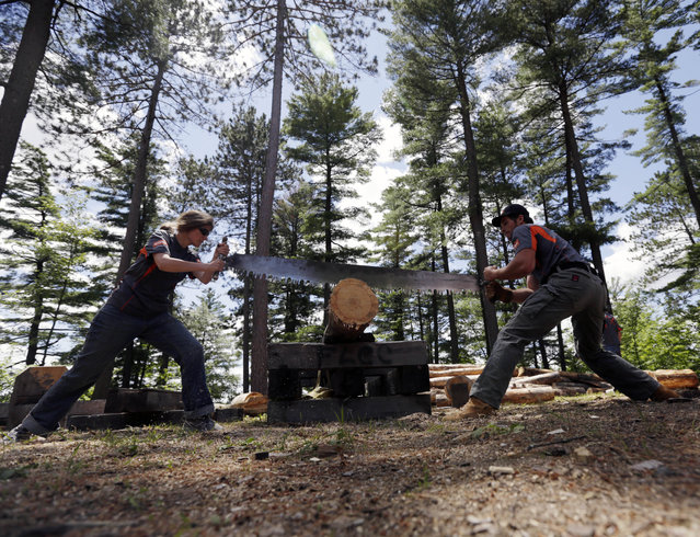In this July 10, 2014 photo, Bevin Rainwalker, left, of West Rupert, Vt., and Liam Gilbert of Blue Bell, Penn., saw a log at the cross cut station at the Adirondack Woodsmen's School at Paul Smith's College in Paul Smiths, N.Y. Eighteen young students in matching gray sports shirts took part recently in a weeklong crash course on old-school lumberjack skills such as sawing, chopping, ax throwing, log boom running and pole climbing. (Photo by Mike Groll/AP Photo)