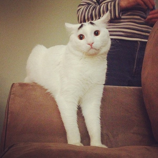 The Cat With Eyebrows