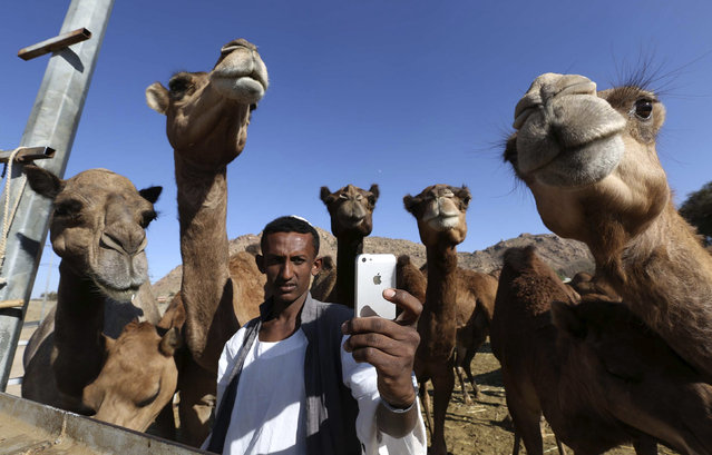 "A man takes a ""selfie"" with camels at a farm in Taif November 1, 2014. Saudi Arabia said late on Wednesday it had detected six new cases of the deadly Middle East Respiratory Syndrome (MERS) in 24 hours, the biggest daily jump for months with officials blaming lax hospital procedures. (Photo by Mohamed Alhwaity/Reuters)"
