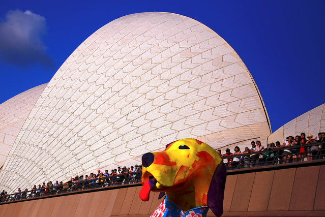 Spectators look at a large dog-shaped lantern as part of celebrations in Sydney, Australia February 16, 2018. (Photo by David Gray/Reuters)