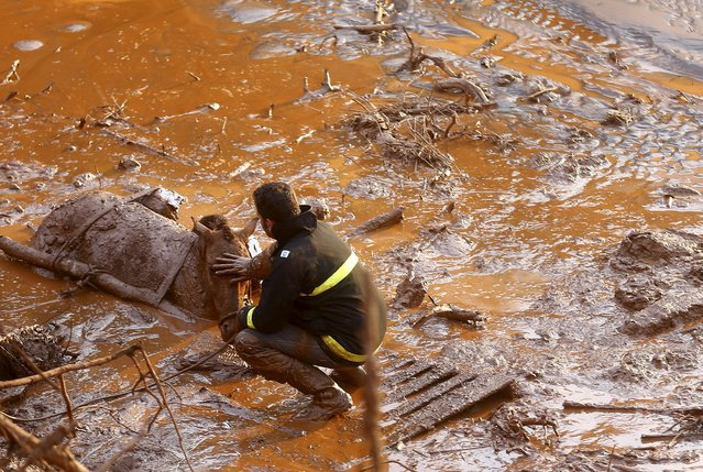 A rescue worker touches the face of a horse as they try to save it at Bento Rodrigues district, which was covered with mud after a dam owned by Vale SA and BHP Billiton Ltd burst in Mariana, Brazil, November 6, 2015. Casualties from the collapsed dam at a Brazilian mine owned by Vale and BHP Billiton mounted on Friday after rescue teams worked through the night to find the dozens missing in mudslides that devastated a nearby village. (Photo by Ricardo Moraes/Reuters)